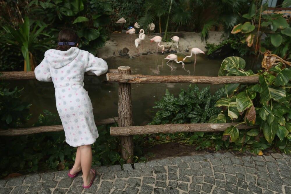 Tropical Islands Flamingos