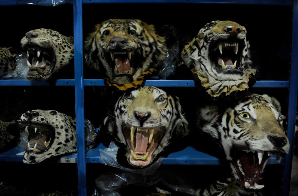 Tigertempel Thailand