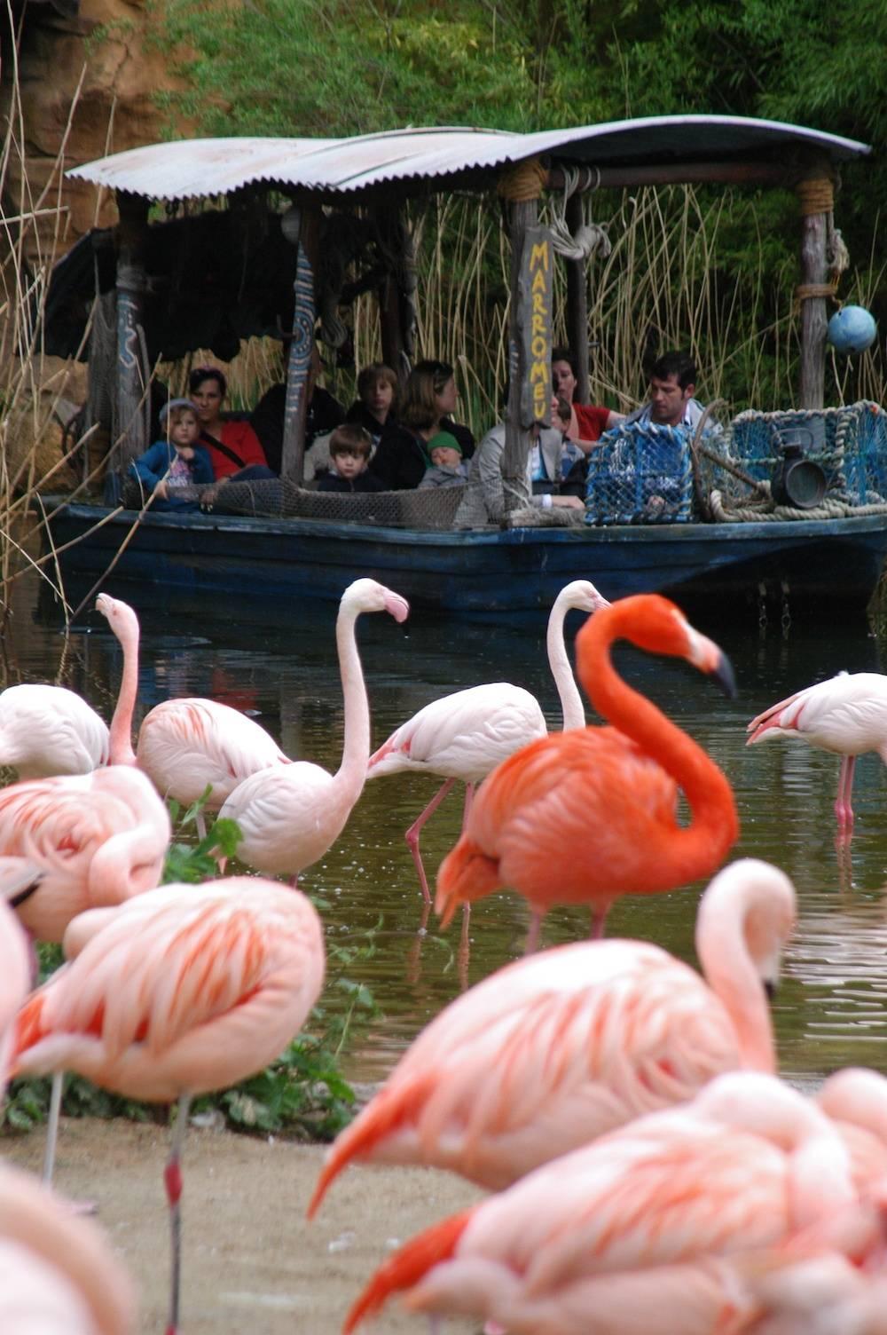 Live mit dabei: Hannovers Erlebnis-Zoo kann man auch im Boot erkunden. Foto