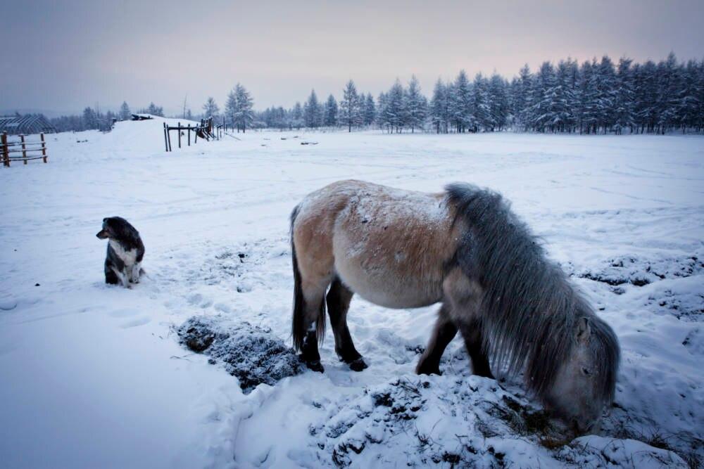 Oimjakon kältestes Dorf der Welt