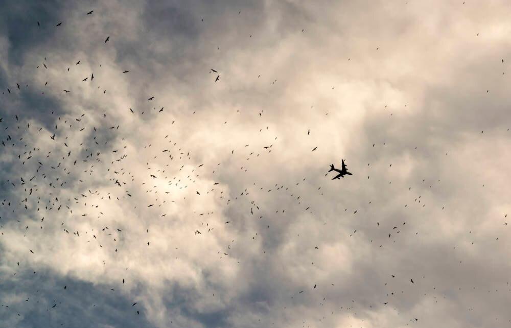 Ein Flugzeug fliegt durch einen Vogelschwarm