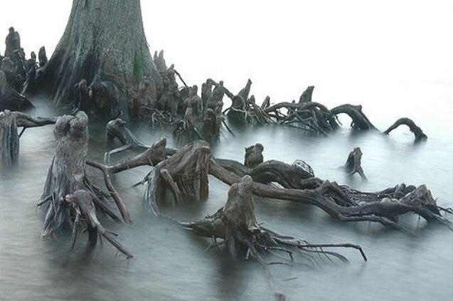 Gruseligster Baum