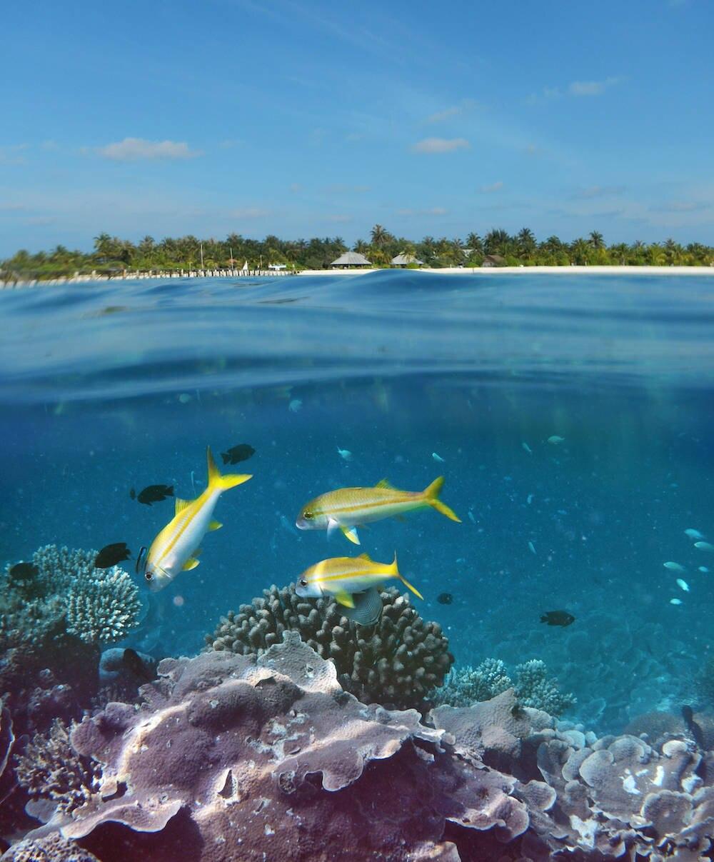 Schnorcheln ist auf den Seychellen immer ein Erlebnis