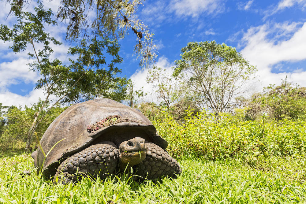 Mit den Galápagos-Schildkröten ist nicht zu spaßen
