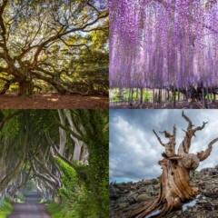 Die Bäume der Superlative