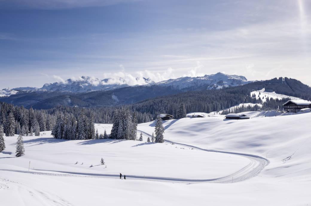 Laut skiresort.de das beste deutsche Skigebiet: Winklmoosalm