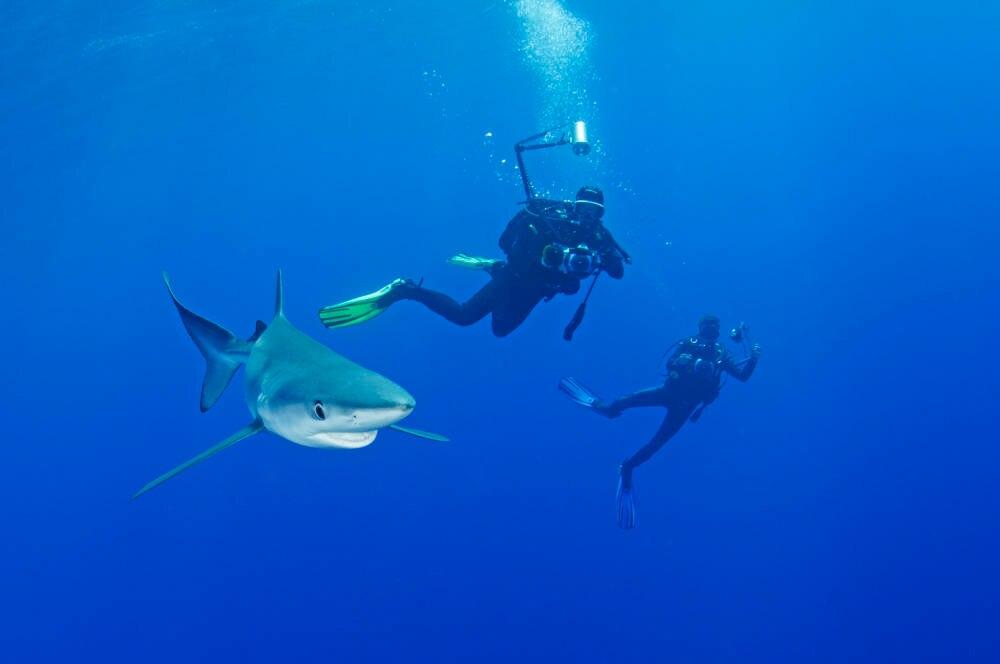 Blauhaie, Taucher