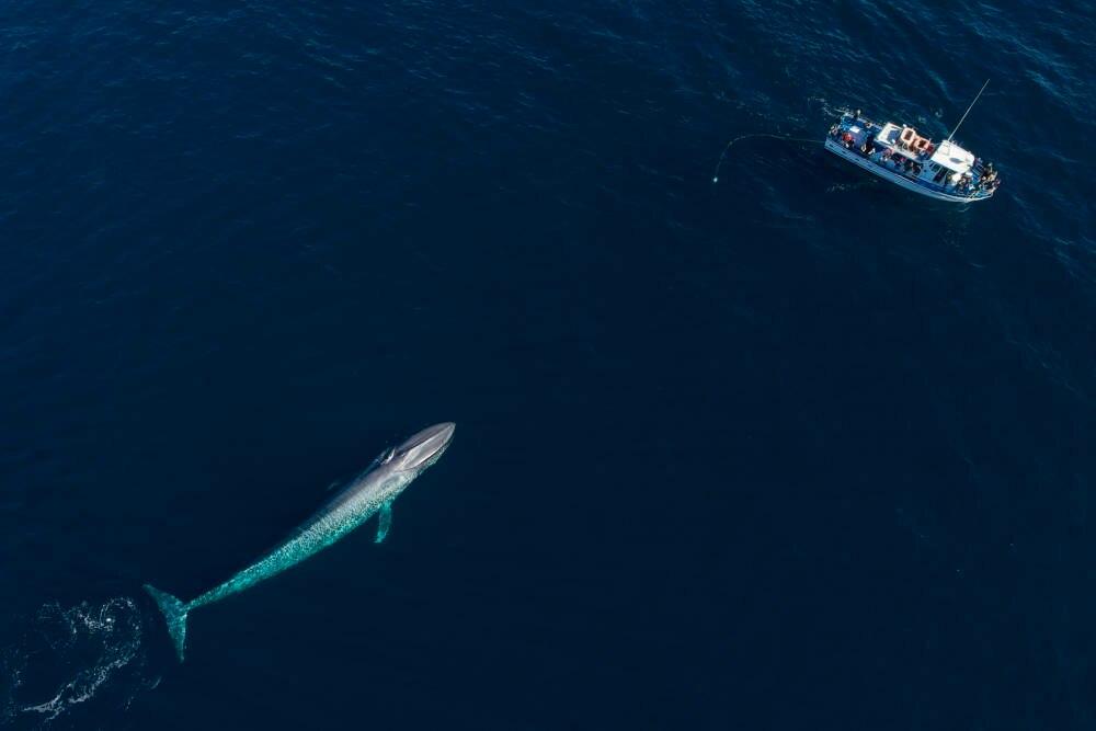 Whale Watching, Wal und Menschen