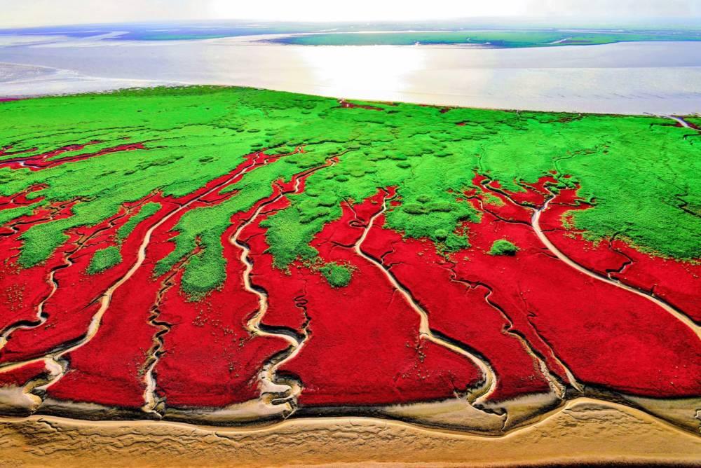 Rot und grün schimmert das Feuchtgebiet von Panjin