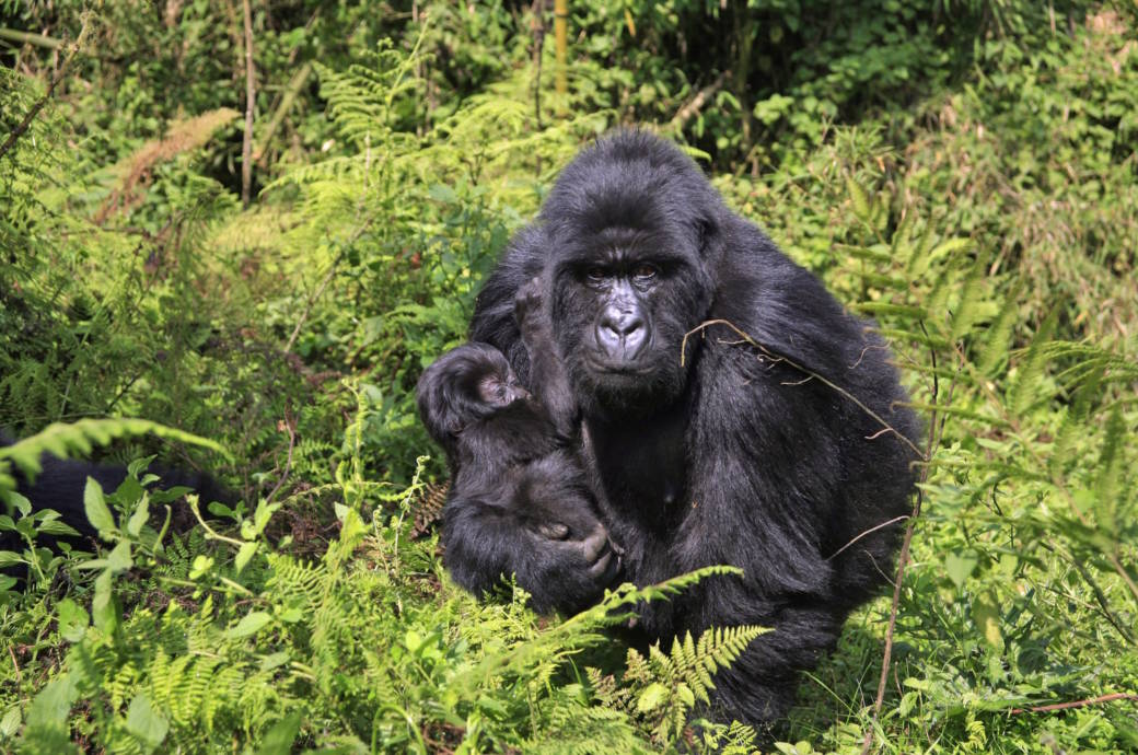 Virunga Nationalpark