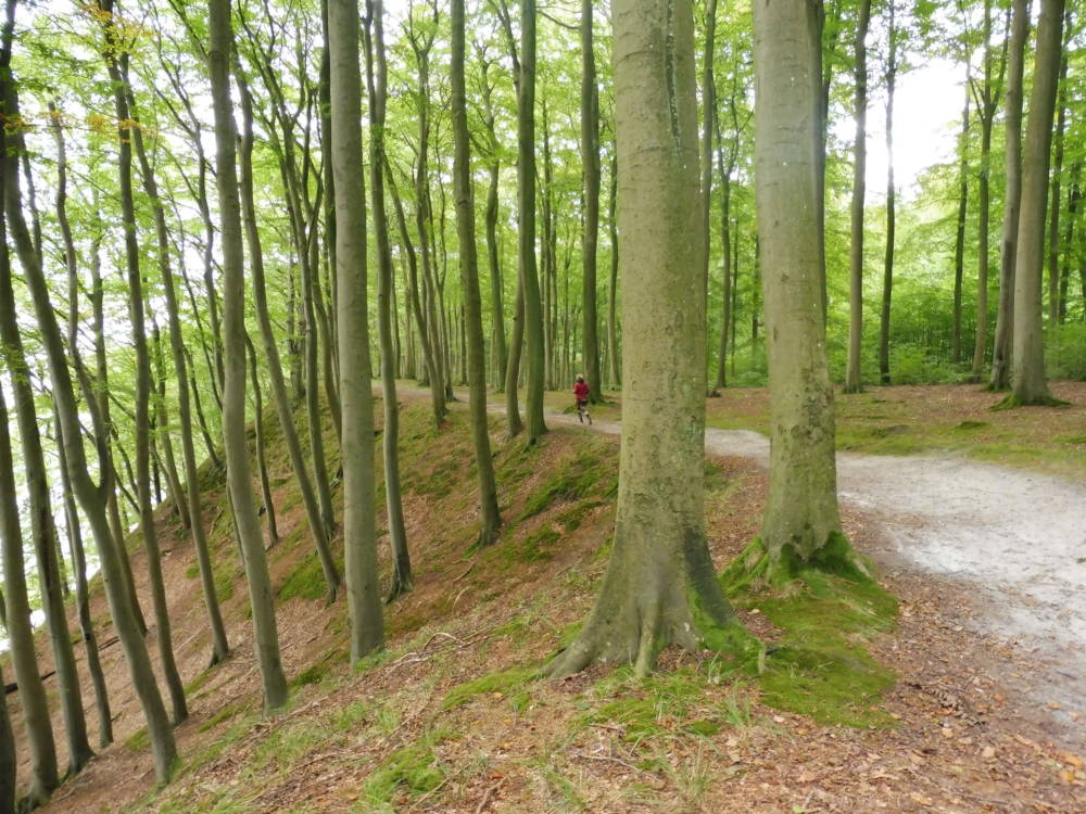 Waldlauf in Granitz