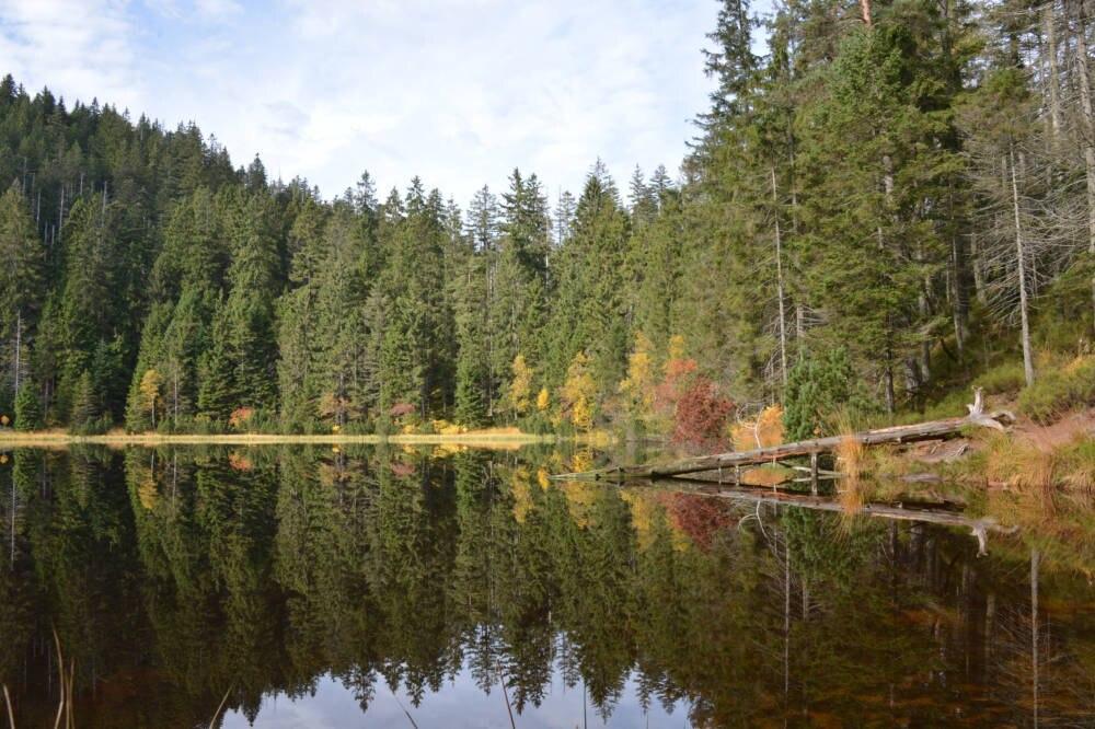 Schwarzwald Nationalpark
