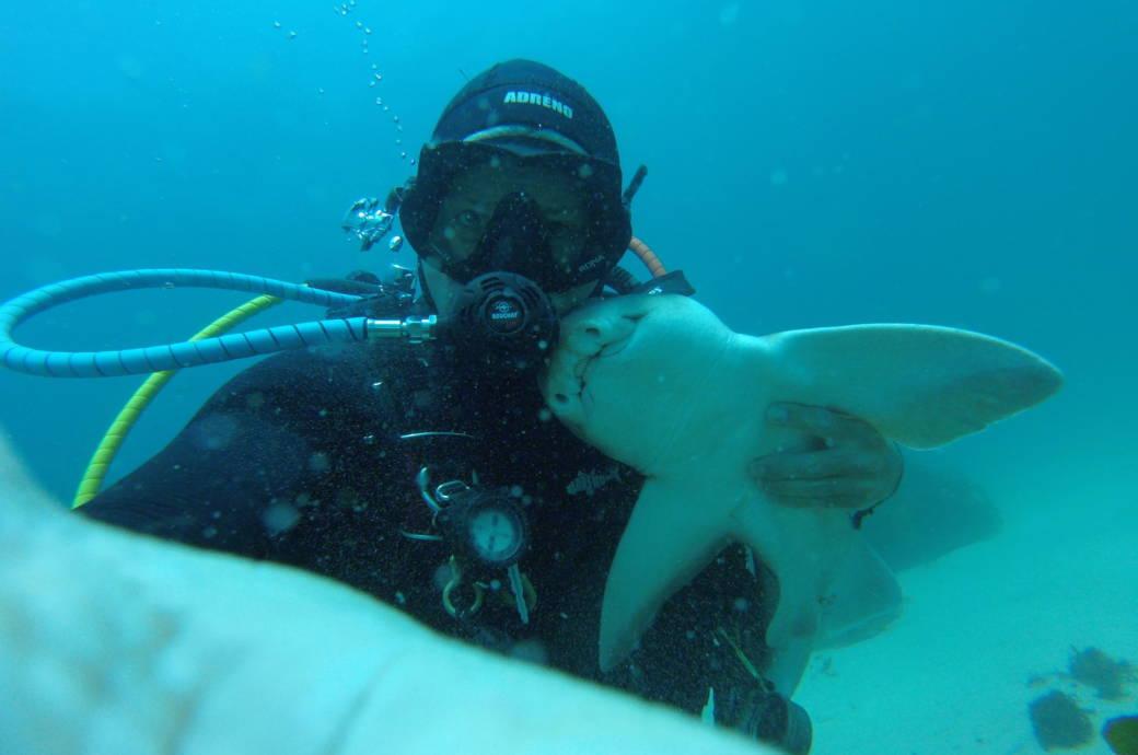 in australien der hai der mit einem tauchlehrer kuschelt travelbook