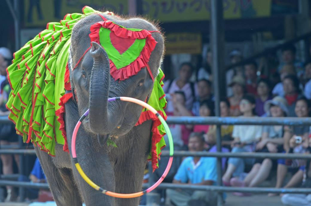 Elefantenshow Thailand