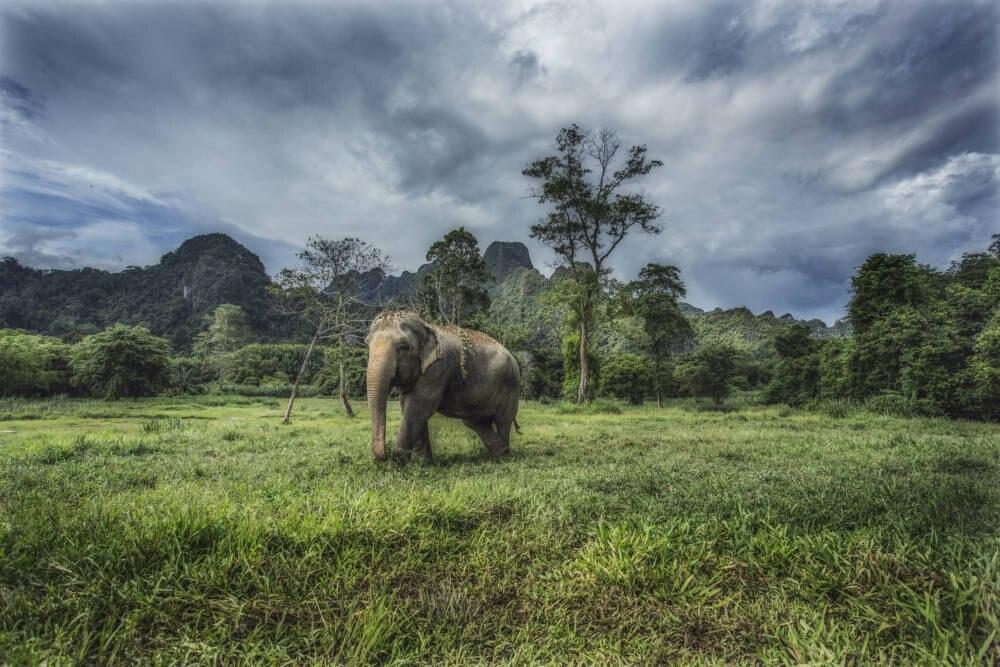 Wilder Elefant Thailand