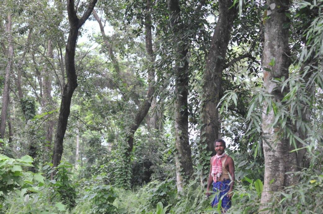 Jadav Payeng im Molai-Wald in Majuri