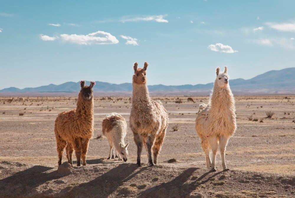 Patagonische Wüste, Argentinien