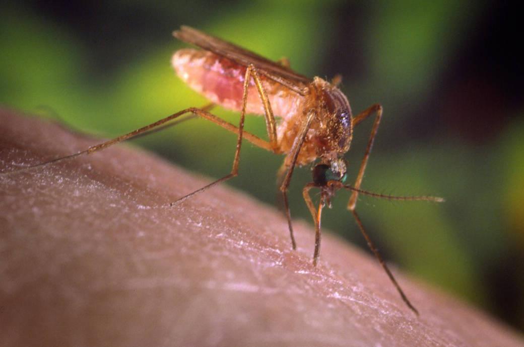 Wie Sie sich auf Reisen vor Mücken schützen