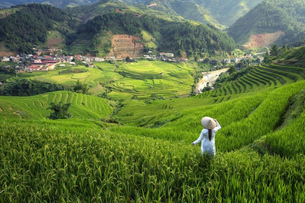 Reisfelder in der Yen-Bai-Provinz in Vietnam