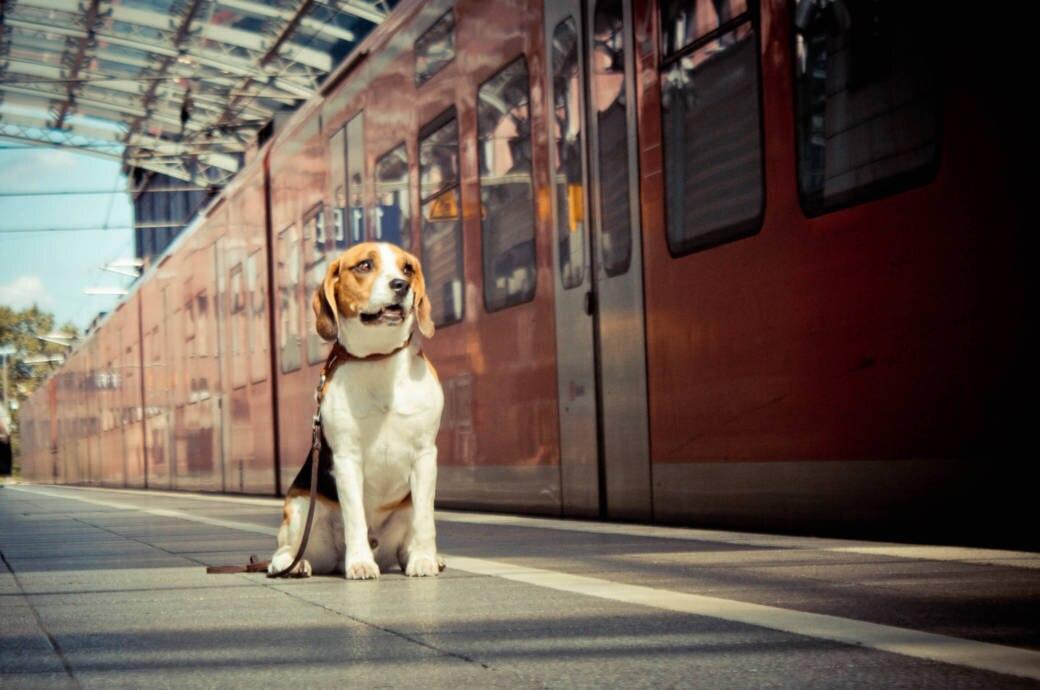 Bahnfahren mit Hund – die wichtigsten Tipps