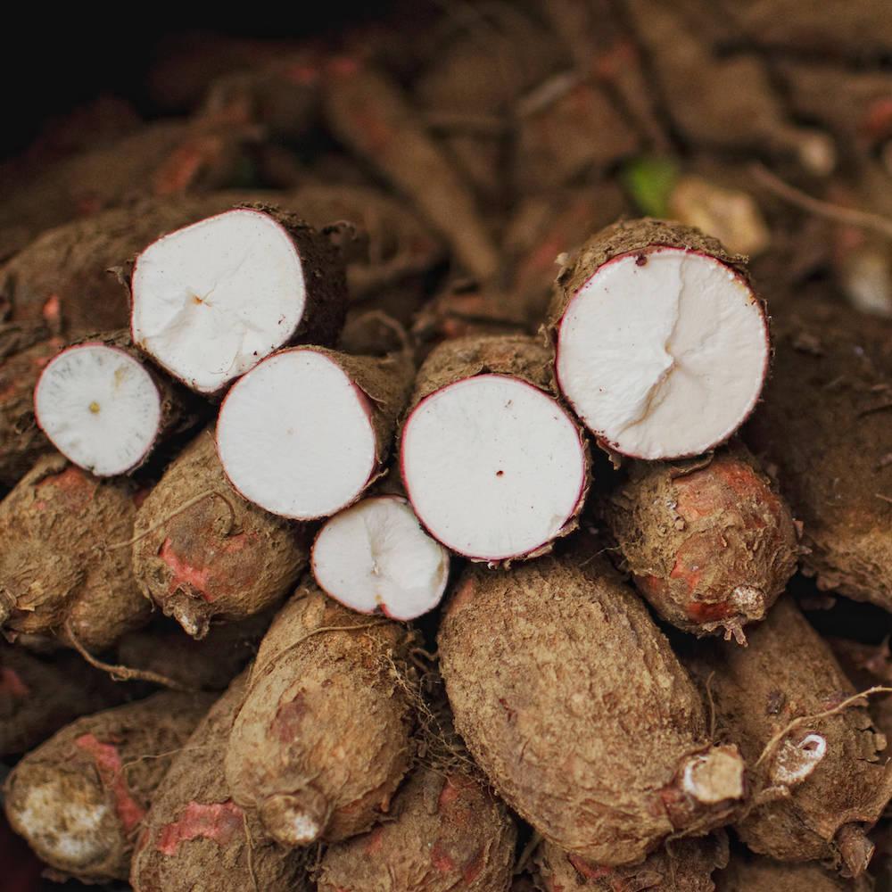 Cassava oder Maniok