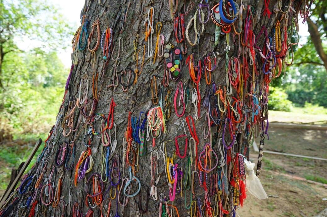 Die furchtbare Geschichte hinter diesem Baum in Kambodscha