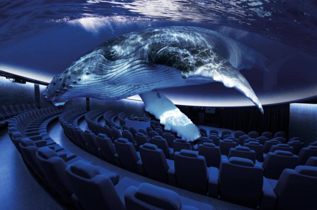 Virtuelles Aquarium Palma de Mallorca