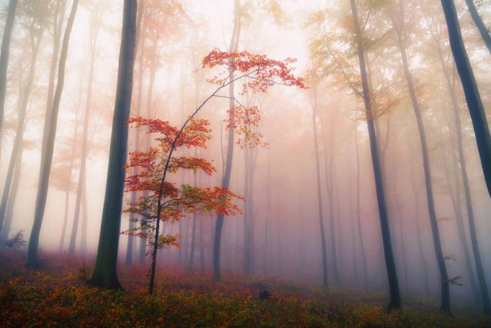 Mystischer Wald, der die Fantasie anregt: La Forêt de Brocéliande.