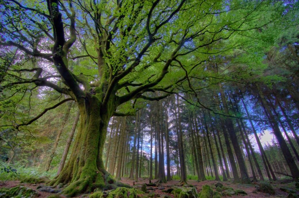 Wer Fantasie mitbringt, wird reich belohnt - der Zauberwald von Brocéliande lebt von und in der Vorstellungswelt der Besucher