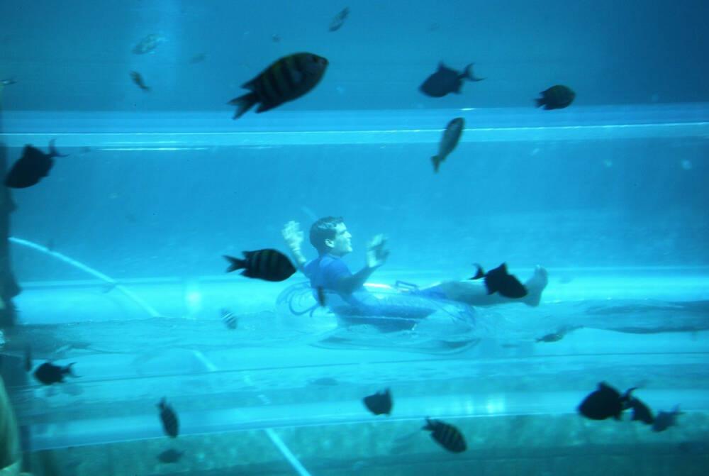 Cooles Erlebnis: Die Röhre dieser Wasserrutsche in Dubai führt mitten durch ein Aquarium