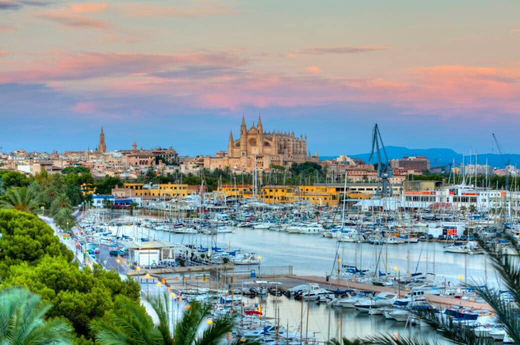Gefährlicher Ratten-Lungenwurm auf Mallorca entdeckt