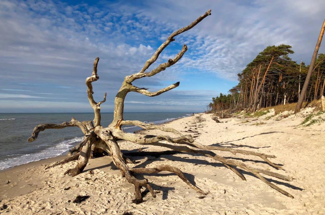 7 Dinge, die Sie an der Ostsee unbedingt tun sollten!
