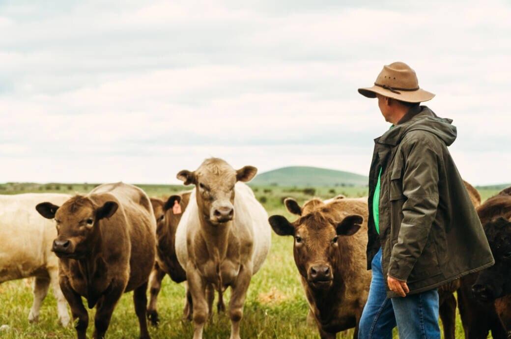 Ein Farmer und seine Kühe in Australien