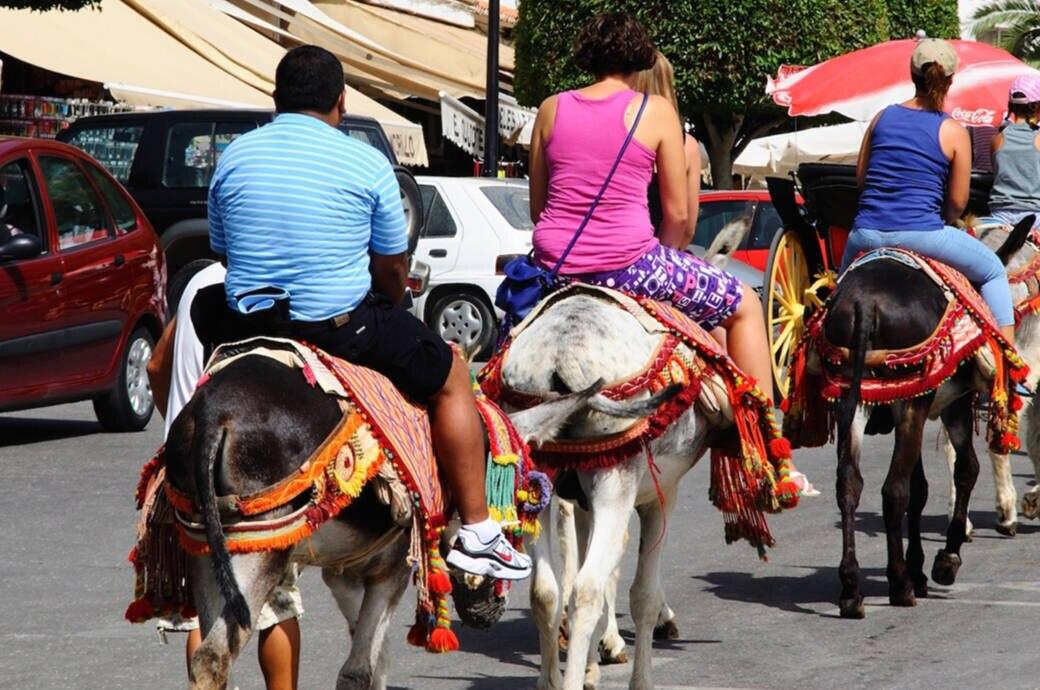 Viele Urlauber nutzen die Esel, wenn sie die Stadt besuchen – obwohl sie oft viel zu schwer für die Esel sind