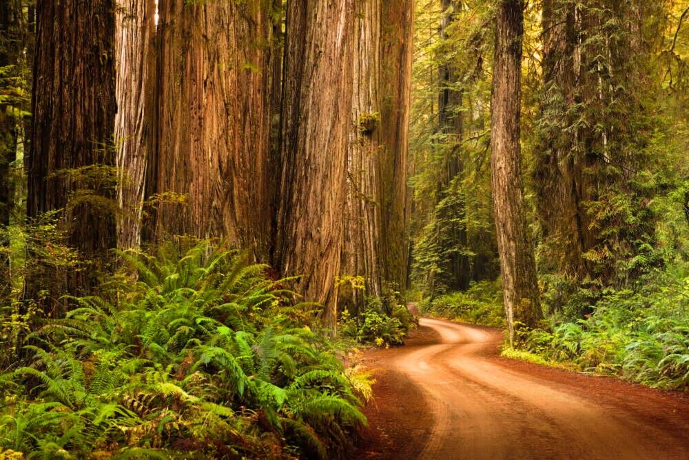 Blick in den RedwoodNationalpark in Kalifornien