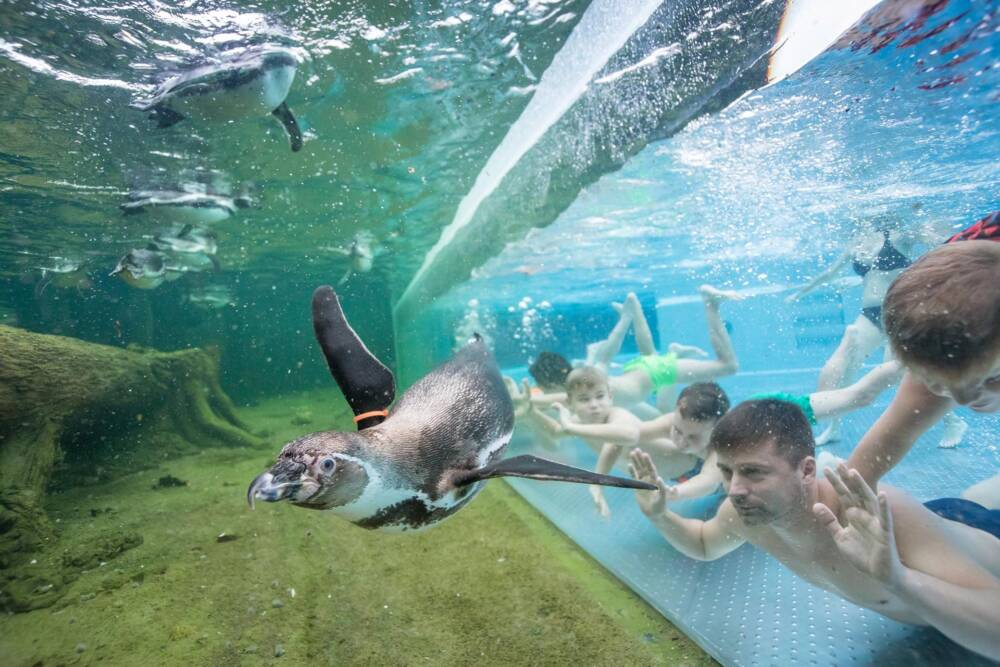 Spreewelten Bad, Pinguine