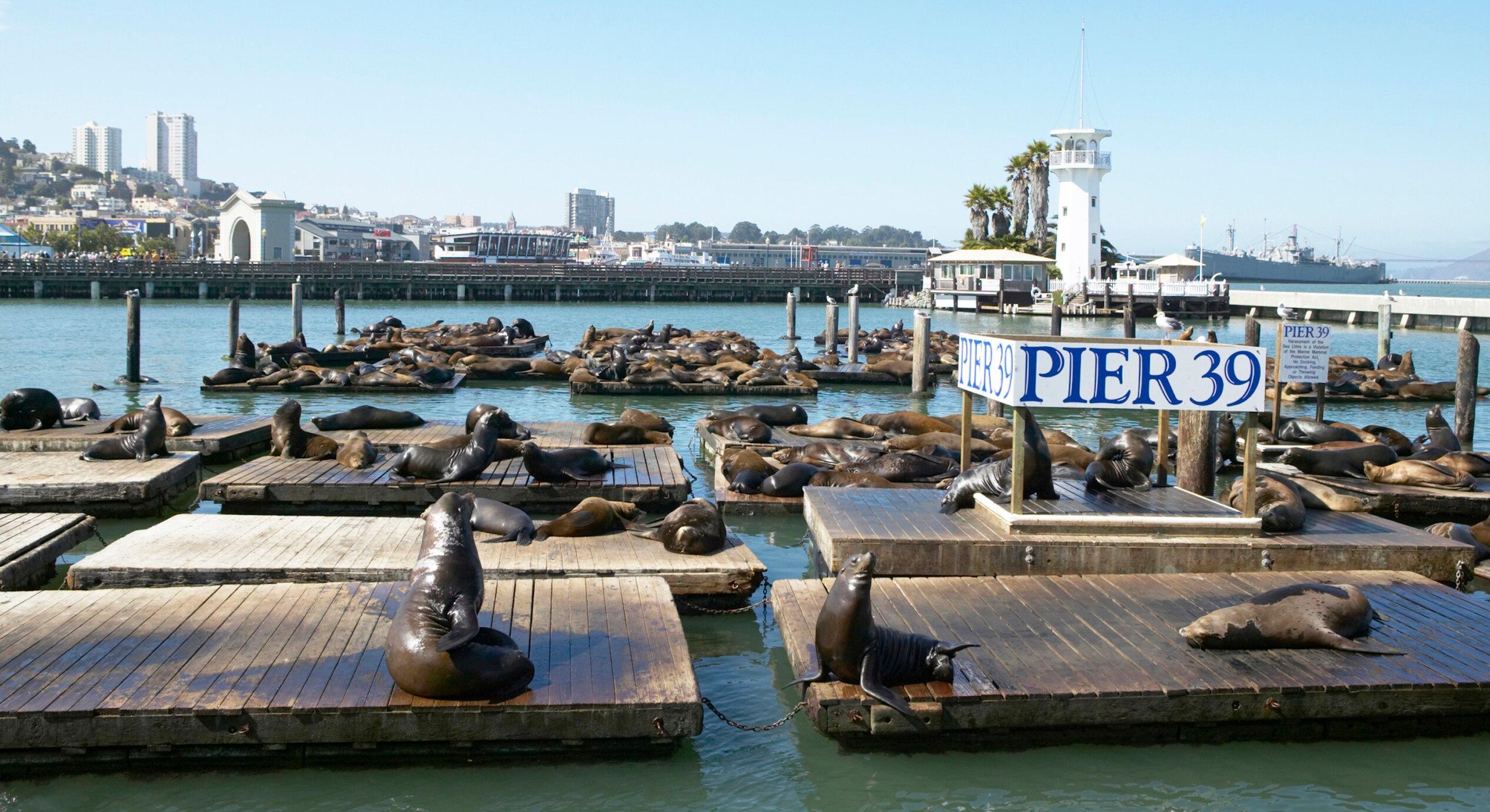 Die weltberühmten Seelöwen von Pier 39 feiern Jubiläum