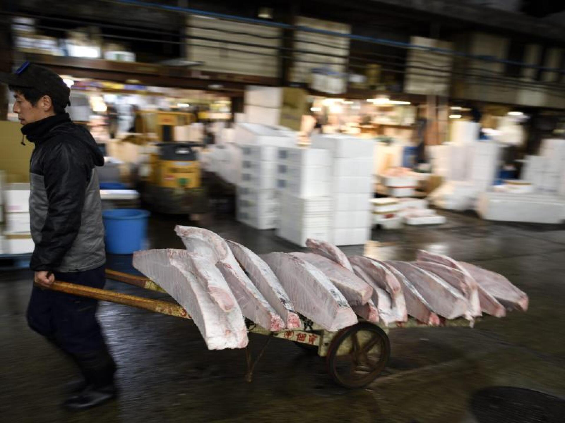 Gefrorener Thunfisch