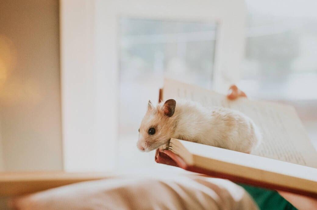 Mann erschleicht sich mit Mäusen Gratis-Nächte in Hotels – Anklage!