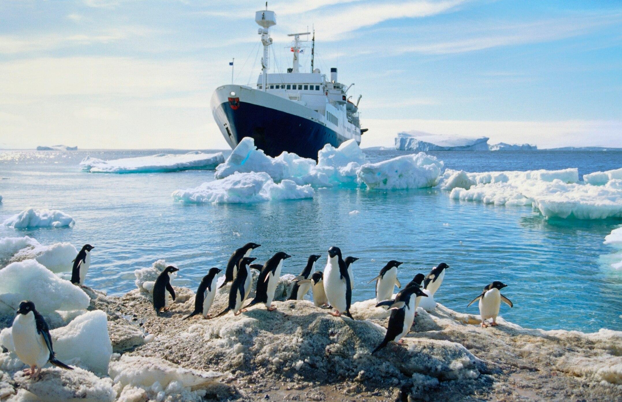 Viele Antarktis-Urlauber freuen sich besonders auf Begnungen mit Pinguinen – doch es müssen Regeln beachtet werden