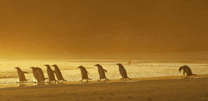 Pinguine am Strand