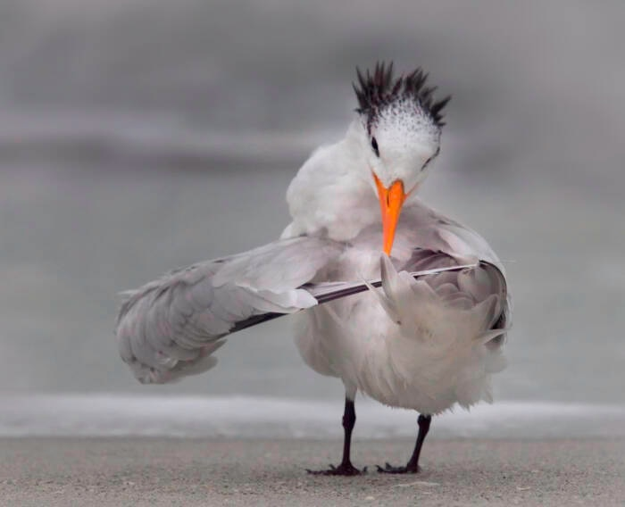 Eine Schwalbe dreht ihre Flügel