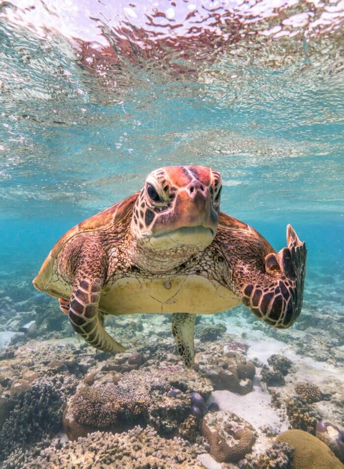 Eine Schildkröte zeigt den Mittelfinger