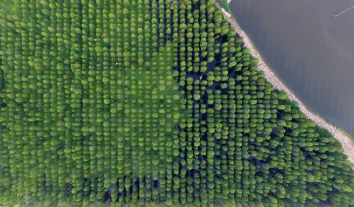 Auch aus der Luft ein Spektakel: der Wasserwald im Luyang Lake Wetlands Park in der chinesischen Provinz Jiangsu