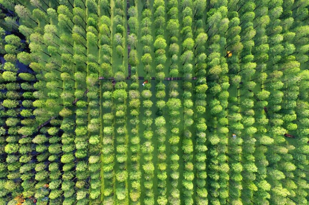 Wald im Luyang Lake Wetlands Park in China